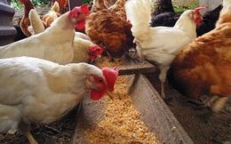 Thức ăn chăn nuôi tăng giá chóng mặt, đến nỗi làm đảo lộn dòng chảy thương mại toàn cầu