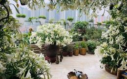 Hoa loa kèn vào mùa giá siêu rẻ, 'mãn nhãn' khu vườn nghìn bông đua nở