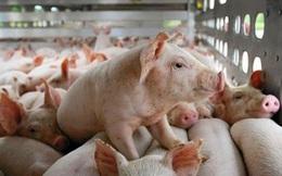 Thị giá chỉ 12.300, một công ty nuôi heo có EPS 2020 tăng gấp 8 lần lên 13.300 đồng, từng có lúc EPS đạt 104.000 đồng