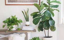 10 loại cây phong thủy tốt nhất cho phòng ngủ vì khả năng lọc không khí, giúp gia chủ phát tài lộc