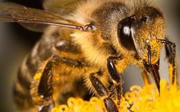 Ong có thể phát hiện người dương tính với COVID-19 chỉ trong vài giây, thậm chí cả khu vực có virus SARS-CoV-2 trong không khí
