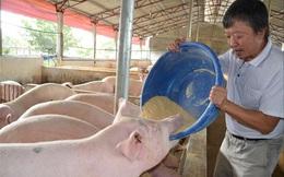 Giá lợn hơi giảm kỷ lục, người nuôi lao đao