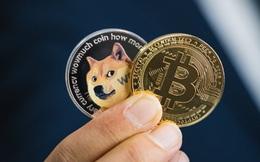 Từ Bitcoin đến Dogecoin: Động lực thực sự thúc đẩy đà tăng là gì và đâu là tương lai của thị trường tiền số?