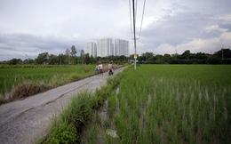 Xác định lại hệ số điều chỉnh giá đất nông nghiệp tại Tp.HCM