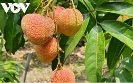 Nhiều giải pháp hỗ trợ sản xuất và tiêu thụ nông sản tại Bắc Giang