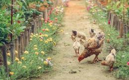 """Khu vườn """"đậm chất thơ"""" bình yên như cổ tích khiến hàng nghìn người mơ ước của cô gái rời Hà Nội về quê"""