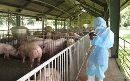 Thu hút đầu tư vào nông nghiệp: Bài học từ thủ phủ chăn nuôi Đồng Nai