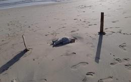 """Thi thể em bé di cư nằm trơ trọi giữa bãi biển gây chấn động dư luận, thảm kịch trên hành trình tìm """"miền đất hứa"""" bao giờ mới chấm dứt?"""