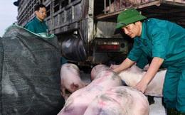 Vì sao tạm dừng nhập khẩu lợn sống từ Thái Lan?