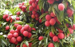 Thủ tướng chỉ đạo tháo gỡ khó khăn tiêu thụ nông sản cho Bắc Giang
