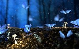 Hiệu ứng cánh bướm: Thiếu 0,25 điểm thi làm thay đổi một đời người, tài xế đi nhầm đường dẫn đến đại chiến thế giới?