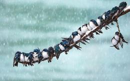 """Phỏng vấn hỏi: """"Làm sao để bắt được 100 con chim đang đậu trên cây?"""", câu trả lời không ngờ của ứng viên trúng tuyển là bài học đắt giá về tư duy làm việc, đáng ngẫm!"""