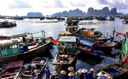 Quảng Ninh đóng cửa chợ đầu mối hải sản để chống dịch