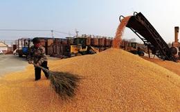Mặt hàng chủ lực trong xuất khẩu của Việt Nam là lực cản làn sóng tăng giá lương thực toàn cầu