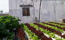 Dù không có sân thượng nhưng mẹ đảm ở Sài Gòn vẫn có được vườn nông sản xanh mướt trên mái tôn