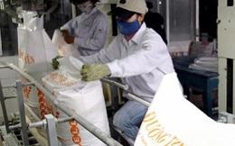 Đề xuất đấu giá hạn ngạch nhập khẩu đường trong quý 3/2021