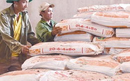 Giá phân bón tăng, sao không dừng xuất khẩu?
