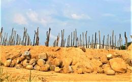 Nông dân rục rịch trồng mới hồ tiêu sau khi giá tăng phi mã, chuyên gia cảnh báo cẩn trọng