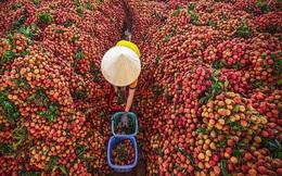 Tổng cục Quản lý thị trường giao chỉ tiêu mỗi Cục mua 1 tấn vải thiều Bắc Giang