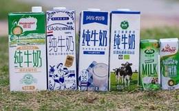 """Trung Quốc khó giải cơn """"khát sữa"""" do thiếu… bò sữa giống"""