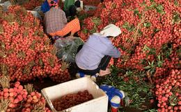 40 tấn vải tươi Việt Nam sắp bán tại Australia