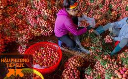 Một nông dân Bắc Giang livestream 10 phút bán 2 tấn vải thiều