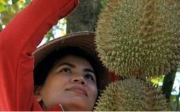 Tìm liên kết tiêu thụ sầu riêng cho miền núi Khánh Hòa