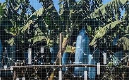 10 năm thâu tóm 6,5 triệu hecta đất trên toàn thế giới, các công ty Trung Quốc đang toan tính gì?