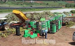 Hàng vạn cành hoa Đà Lạt xuất khẩu sang Úc buộc phải tiêu hủy