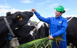 Hưởng lợi từ công ty mẹ Vinamilk, Mộc Châu Milk báo lãi quý II tăng 47% cùng kỳ năm trước