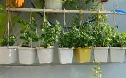 Những điều phải biết nếu muốn trồng rau sạch ở ban công chung cư có diện tích nhỏ hẹp