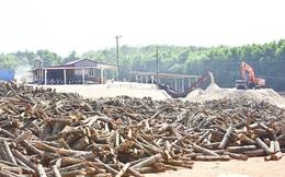 Bộ Tài chính nói 'không' với đề xuất tăng thuế xuất khẩu gỗ