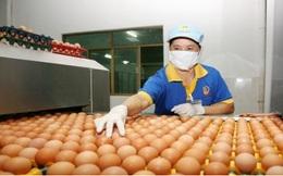 Nguồn cung trứng gia cầm trong dịch bệnh Covid-19 còn rất lớn