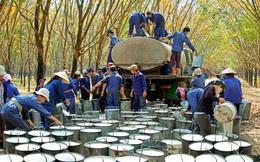 Không còn khoản đền bù đất, Cao su Phước Hòa (PHR) đặt kế hoạch lợi nhuận công ty mẹ quý 3 vỏn vẹn 10 tỷ đồng