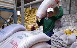 Giá lúa gạo bắt đầu tăng sau chuỗi ngày ảm đạm, ngân hàng mở hầu bao cho vay mạnh