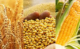 Các nhà đầu tư nông sản đang kỳ vọng điều gì trước báo cáo quan trọng của Bộ nông nghiệp Mỹ?