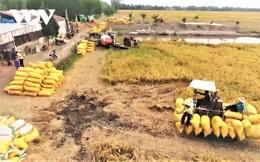 """Kiến nghịmở""""luồng xanh""""cho vận tải đường thủy tiêu thụ lúa gạo ĐBSCL"""