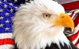 Những 'cánh đại bàng' Mỹ tại Việt Nam: Nhiều đại gia góp mặt nhưng mới chỉ 2 cái tên có doanh thu tỷ đô