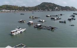 Hàng trăm tấn cá lồng bè chưa có đầu ra