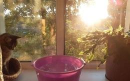 Quên điều hòa đi, đây là những cách vừa đơn giản mà lại hiệu quả giúp bạn dễ dàng đối phó với nắng nóng oi bức