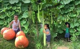 """Khu vườn của mẹ Việt sai trĩu rau củ với kích thước """"khủng"""""""