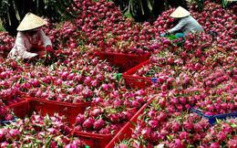 Hàng triệu tấn nông sản sắp thu hoạch 'kêu cứu' tiêu thụ