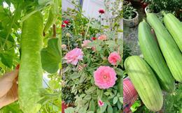 Khoảng sân thượng nhỏ đầy đủ rau sạch và hoa tươi của mẹ đảm ở Sài Gòn