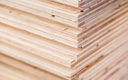 DOC gia hạn ban hành kết luận chống lẩn tránh thuế với gỗ dán từ Việt Nam