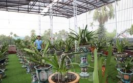 Mê mẩn vườn lan bạc tỷ của chàng kỹ sư tin học bỏ phố về quê lập nghiệp