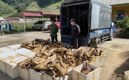 Phát hiện hơn 1 tấn sản phẩm động vật không rõ nguồn gốc