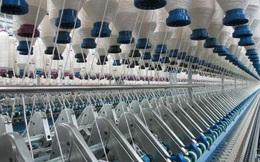 TNG: Có thêm đơn hàng do nhiều doanh nghiệp dệt may phía Nam giảm công suất, doanh thu 8 tháng tăng 16% lên 3.544 tỷ đồng