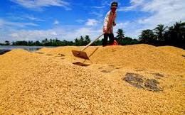 Trung Quốc mua gom gạo Việt Nam, đó là điều tốt?
