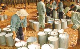 Cao su Hòa Bình: Thanh lý cây cao su đem lại lợi nhuận khủng cho quý I
