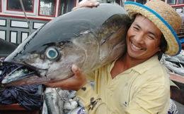 XK thủy sản năm 2014 vượt kế hoạch đến 1 tỷ USD – Kẻ ăn không hết, người lần không ra